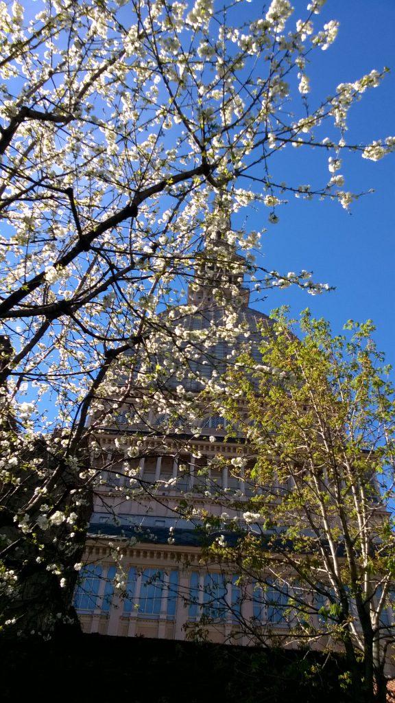 mole-primavera
